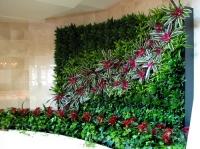 Nhà mát rượi nhờ mảng tường cây xanh