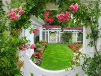 Dàn hồng leo cho cổng nhà lãng mạn ấn tượng